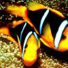 О чем молчат рыбы?