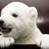 Непослушный медвежонок